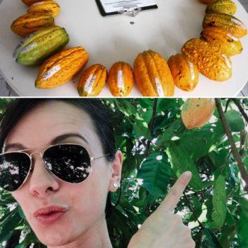 Kakao Variationen und ich im Feld